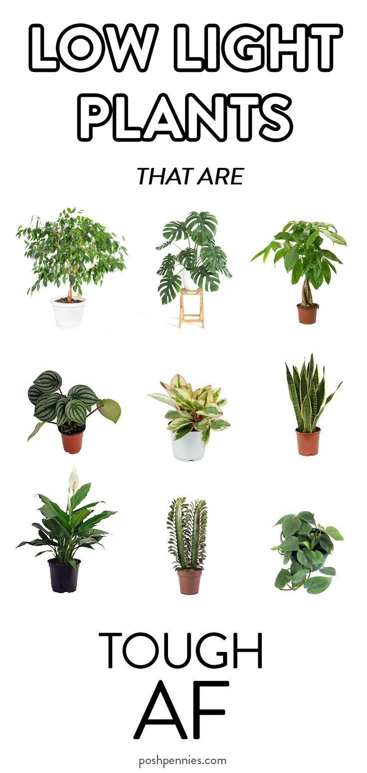 9 Actual Low Light Plants No Really In 2020 Indoor 400 x 300