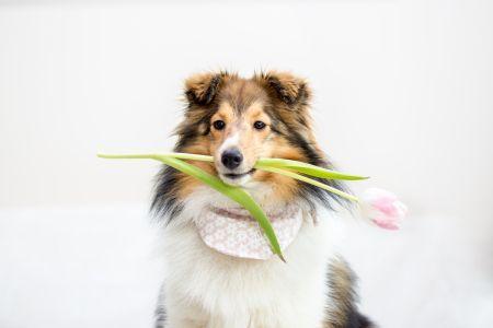 Tipps und Tricks wie euer Hund schön posiert
