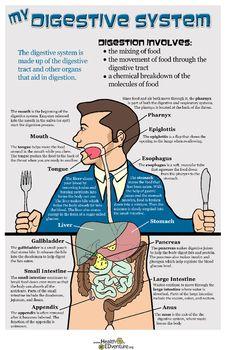 Digestive System Activity Sheet - Free Printable Kids ...