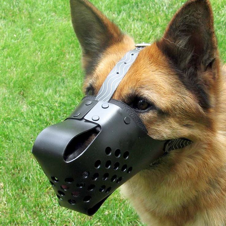 Can A Dog Drink With A Muzzle On