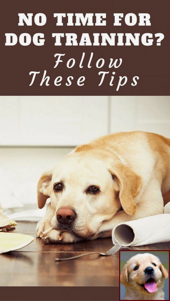1 Have Dog Behavior Problems Learn About House Training A Puppy For Dummies And Clicker Training Dogs Y Dog Training Dog Training Obedience Training Your Dog
