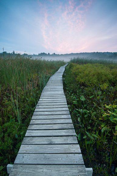 Ethereal Passage (Little Pond, White Memorial Conservation Center, Litchfield, Connecticut)