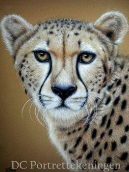 Cheetah by DCportrettekeningen