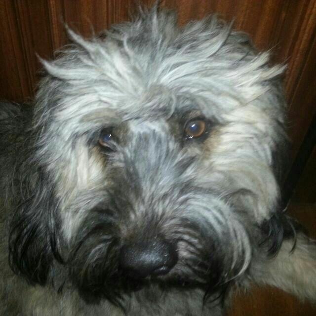 O meu cãozinho !!!