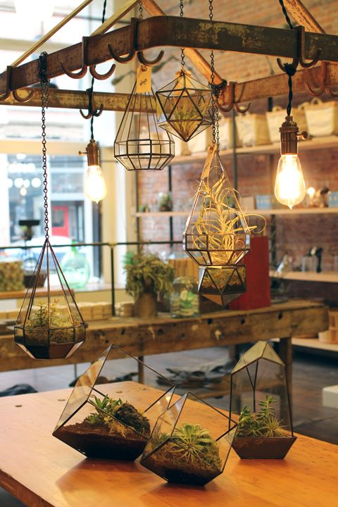 Best 25 Hanging Terrarium Ideas On Pinterest Hanging