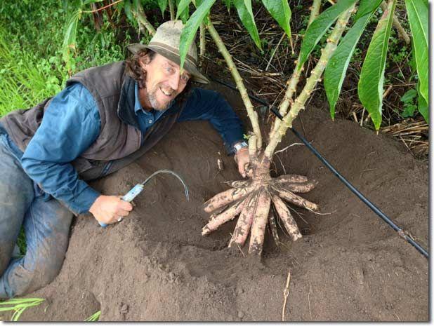 36 best Tapioca & Yuca (Cassava) images on Pinterest ...