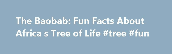 The Baobab: Fun Facts About Africa s Tree of Life #tree #fun http://rhode-island.remmont.com/the-baobab-fun-facts-about-africa-s-tree-of-life-tree-fun/  The Baobab: Fun Facts About Africa's Tree of Life A symbol of life on the African plains, the giant baobab belongs to the genus Adansonia . a group of trees consisting of nine different species. Only two species, Adansonia digitata and Andansionia kilima. are native to the African mainland, while six of their relatives are found in…