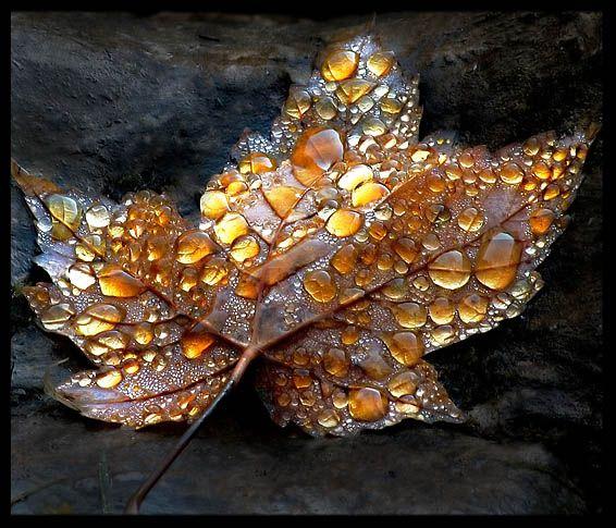 Stunning golden leaf