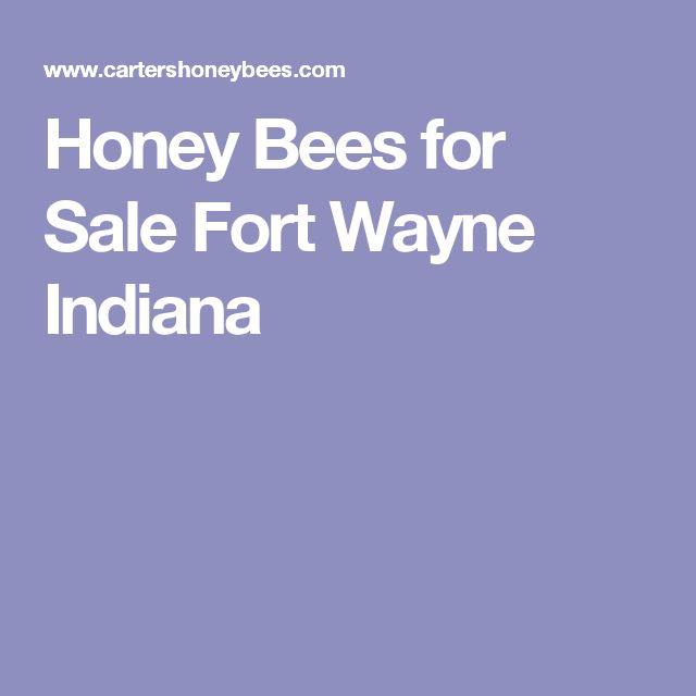 Honey Bees for Sale Fort Wayne Indiana