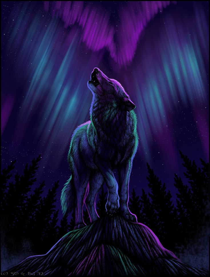 Black Wolf Howling Drawing 72 best Wolves ...