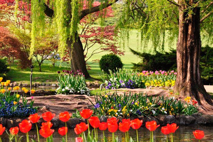 Parco Giardino Sigurtà:il Parco più bello d'Italia a due passi dal Lago di Garda 600.000 metri quadrati di prati e boschi, 1 milione di Tulipani e 30.000 Rose a primavera, 18 specchi d'acqua, il Labirinto, una Quercia di 400 anni: sono solo alcuni dei tesori del Parco Giardino Sigurtà, u