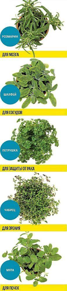 Какую зелень можно выращивать круглый год на подоконнике, чтобы быть здоровым | Мамам, женщинам, бабушкам и очень любознательным.