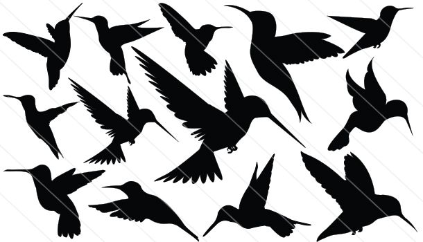 Humming Bird Silhouette Vector (13)