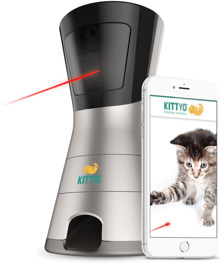 Kittyo Cat Camera and Treat Dispenser Product Review  https://www.floppycats.com/kittyo-cat-camera-and-treat-dispenser-product-review.html