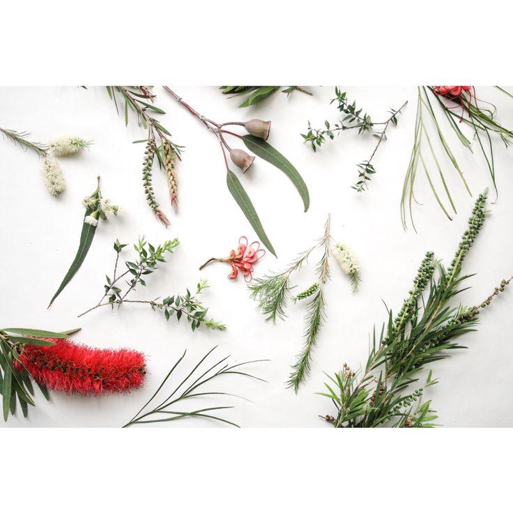 Foraged Australian flora by Belinda Evans.