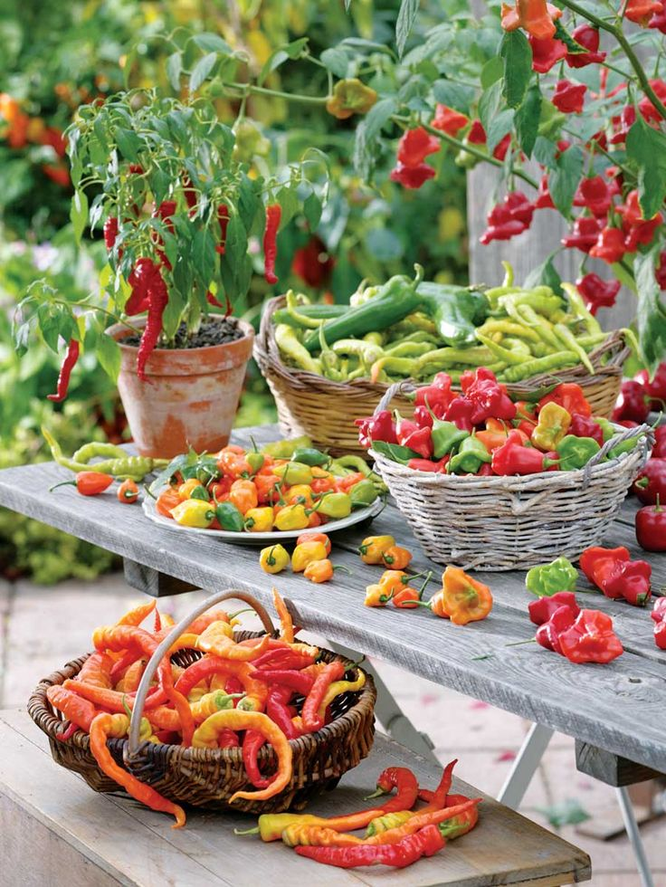 356 Best Images About Hot Peppers On Pinterest Stuffed 400 x 300