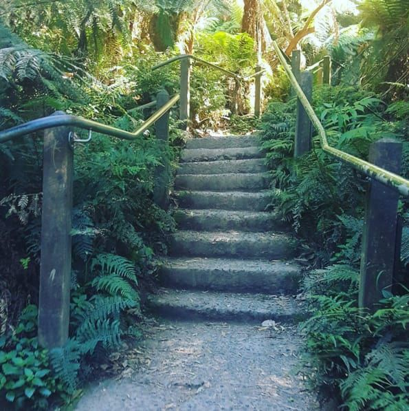 This Kokoda Memorial trail climbs through the lush Ferntree Gully Forest. 1000 steps sounds like a steep amount, but the killer view at the top is worth it.