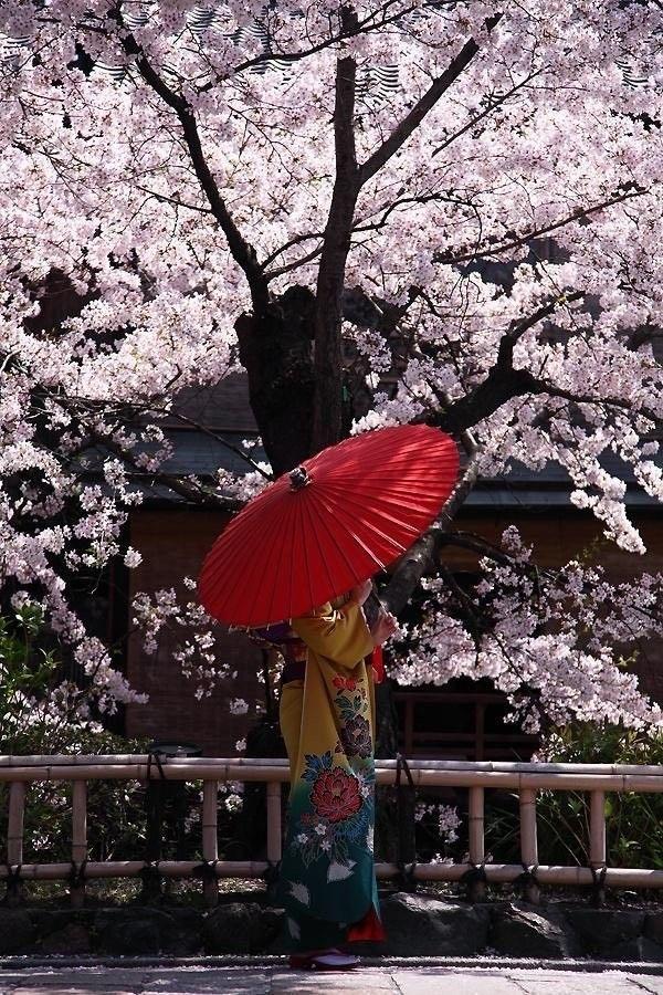 E ʟ ɪ Cherry Blossom Japan Japanese Art Cherry Blossom