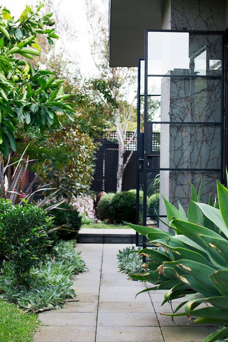 """Antra's brief for the side garden was to """"keep it traditional"""", and to retain the lawn and existing trees. To ensure privacy, Amanda installed a grove of birch trees. Existing clivias were padded out with mass plantings of *Echium* in order to create a thick boundary."""