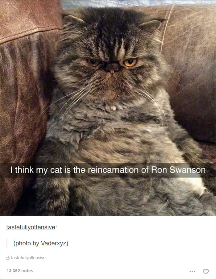Cat Posts On Tumblr That Are Impossible Not To Laugh At - 20 cat posts on tumblr that are impossible not to laugh at