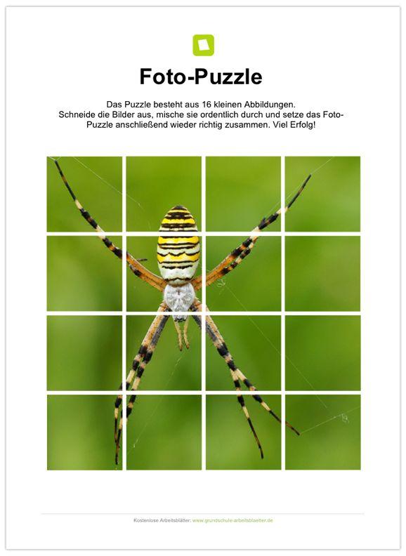 ein kostenloses arbeitsblatt zum thema spinnen auf dem die sch ler ein fotopuzzle finden bei. Black Bedroom Furniture Sets. Home Design Ideas