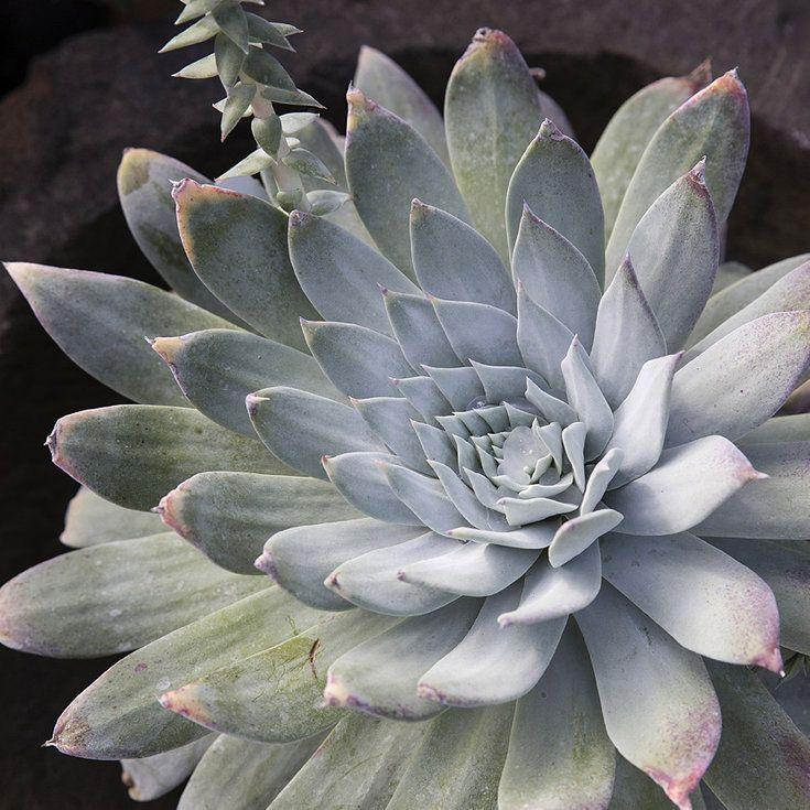 Sunset Garden Apartments: Best 25+ Cactus Types Ideas On Pinterest
