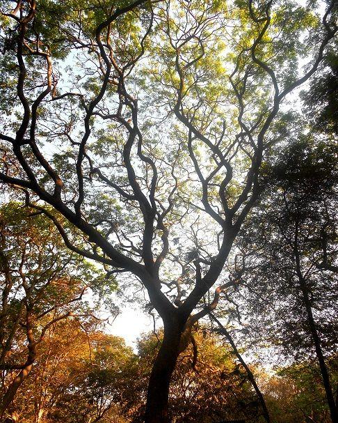Mumbai for the Nature Lover: Sanjay Gandhi National Park, Explore Mumbai's Very Own Forest