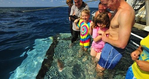 Meet some ocean locals! - Great Barrier Reef and Sydney Harbour Cruising (includes 4 night Reef Cruise)