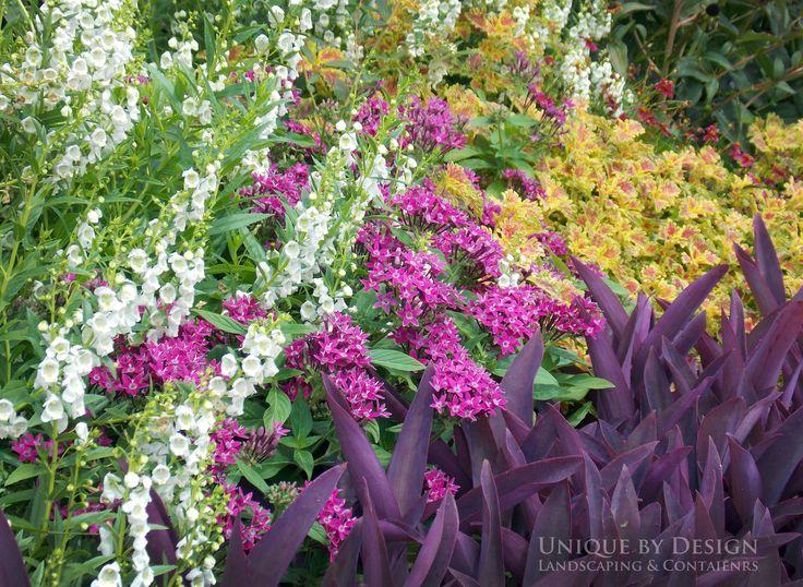 White Angelonia Pink Penta India Falls Coleus And Purple