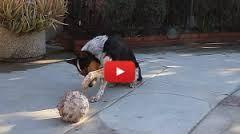 un dressage de chien étonnant [video] - http://www.2tout2rien.fr/un-dressage-de-chien-etonnant-video/