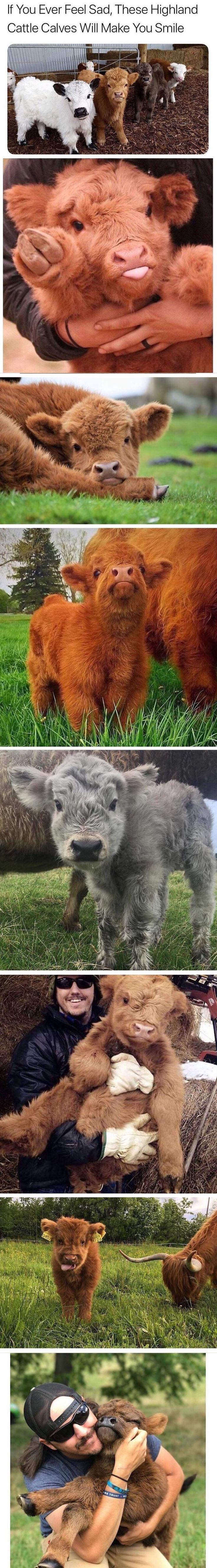 ACH DU LIEBER GOTT !!!!! Soooo süß, dass du Gott liebst !!!!! Soooo süß   – … – Adorable Animals