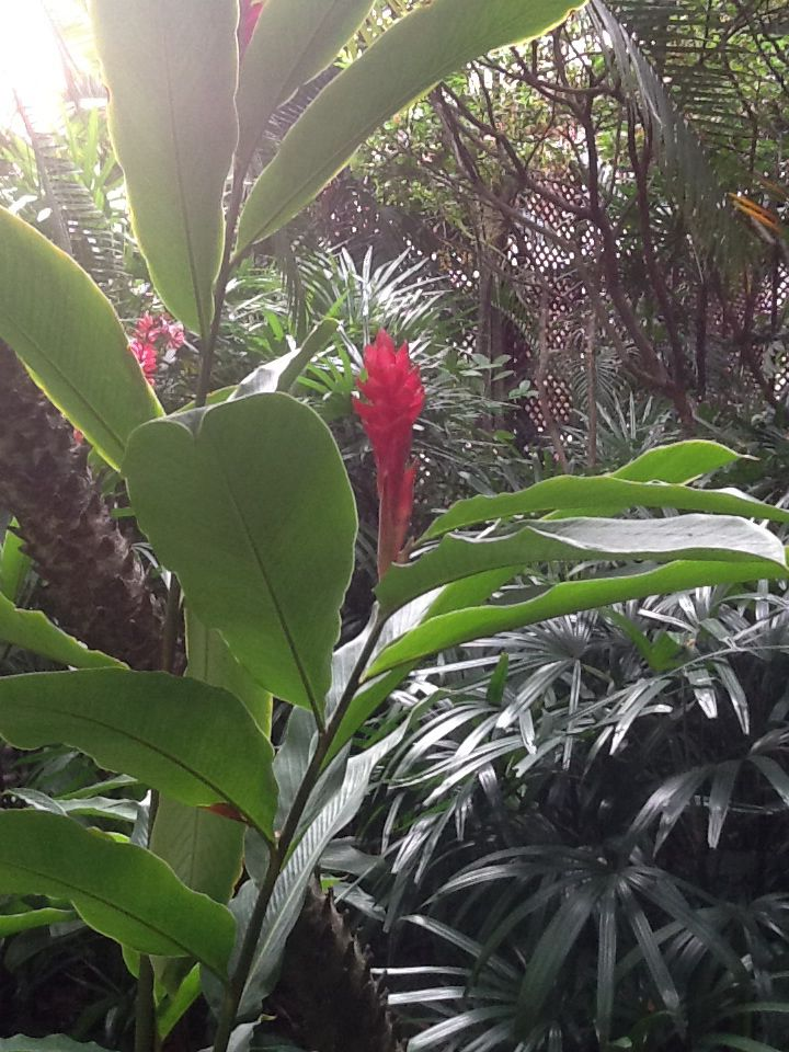 A beautiful plant that is very much at home in Thailand