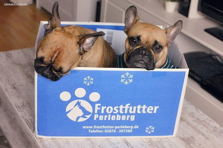 Hundeblog einer Französischen Bulldogge. Mit Rezepten für Hunde, Nähanleitungen für Selbstgemachtes, Ausflugstipps, Produkttests und vielem mehr.