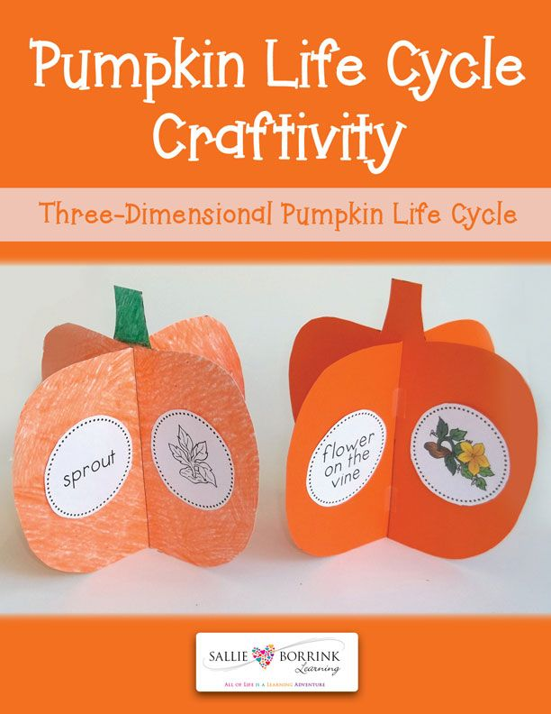 Pumpkin Life Cycle Craftivity is a fun way to learn or review the life cycle! It can be printed and colored or printed on orange papers. The life cycle circles come in both black/white and colored!