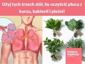 Użyj tych trzech ziół, by oczyścić płuca z kurzu, bakterii i pleśni!