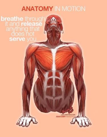 20 best images about anatomy on pinterest  yoga poses