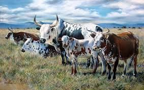Image result for pictures of nguni cattle