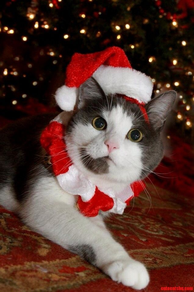 Christmas kitty ... Merry Christmas! from ♡ StoneArtUSA.com ~ affordable custom pet memorials for everyone