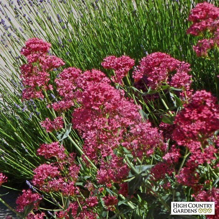 1000 Images About Garden Under Douglas Fir Shade And