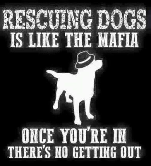 Best 25+ Animal Rescue Quotes Ideas On Pinterest