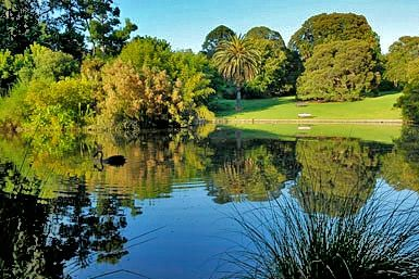 The Royal Botanic Gardens are a picturesque haven for recreation and an important resource for education, conservation, science and horticulture.