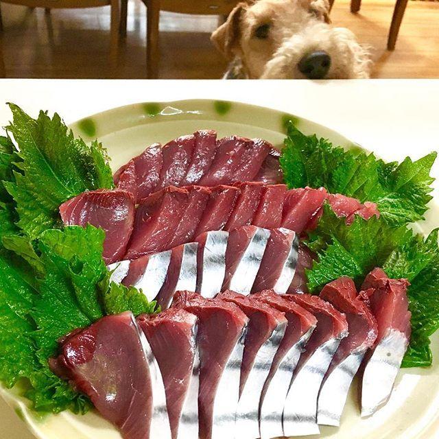 もち鰹❤️ ⑅ #鰹#もち鰹#ぷりぷり#新鮮#魚#おうち晩酌#うち晩酌#晩酌#家のみ#おうちごはん#うちごはん#おかず#おつまみ#毎日#夕食記録#栄養#健康#料理#簡単#シンプル#手作り#家庭料理#cooking#food#pic#お疲れ様#乾杯#wirefoxterrier#dog#愛犬