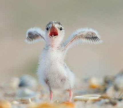 Top 10 Cutest Animals Threatened By BP Oil Spill Anything