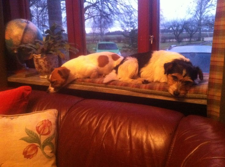 My dogs napping in the window