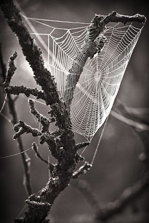 #Spiderweb, Black And White Photography
