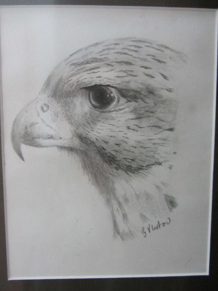 Hawk - Gayner Vlastou