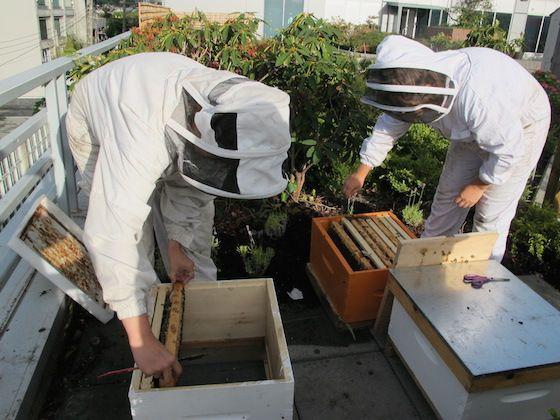 VPD beekeepers