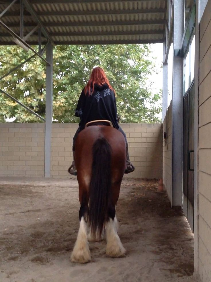 #shire #horse #drafthorse #lady #of #fire