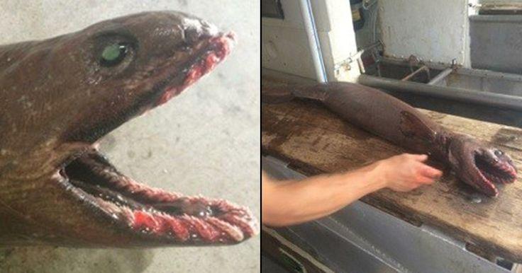 Pescadores capturam raro tubarão 'pré-histórico' na Austrália