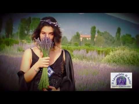 Festa della lavanda Italia, fioritura della lavanda
